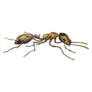 Ameisenbekämpfung Pharaoameise Kontra Schädlingsbekämpfung