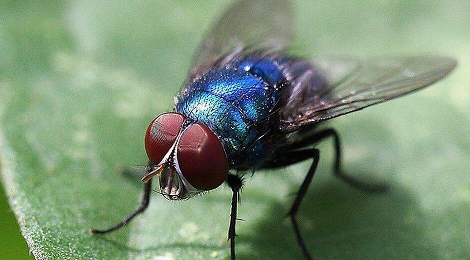Fliegenfanggeräte Kontra Schädlingsbekämpfung